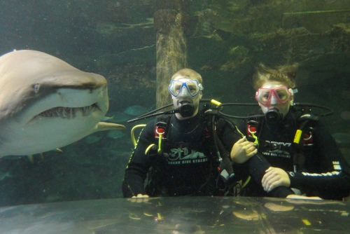 Shark and Divers SDX