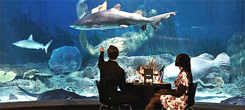 SEA LIFE Melbourne Aquarium Private Dining.png